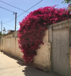 Beersheva 2