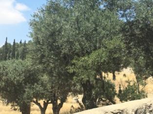 Mt. Of Olives 1