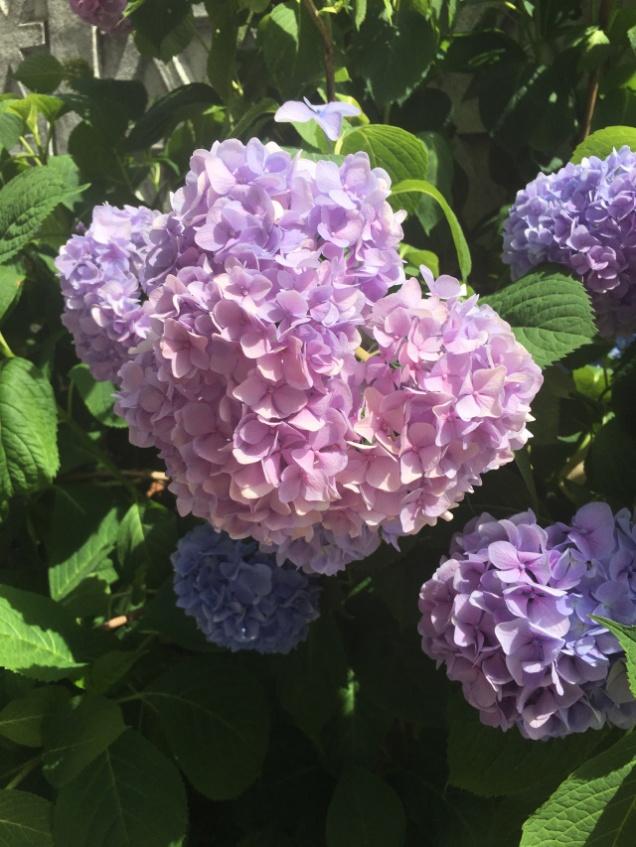 Beautiful flowers in Sebis, Romania