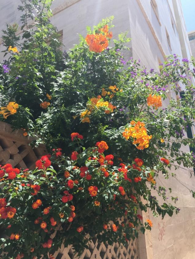 Flowers 22Jun18