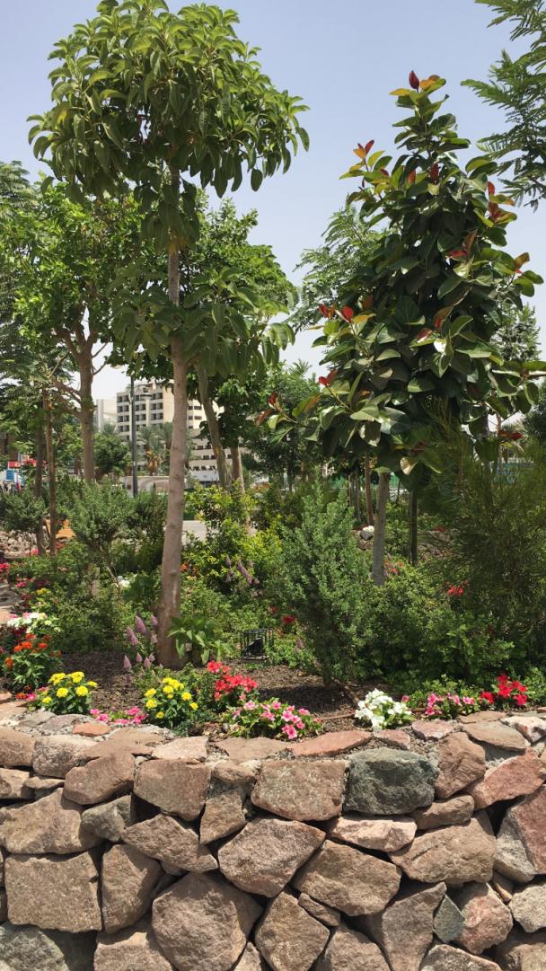 Gorgeous foliage in Eilat
