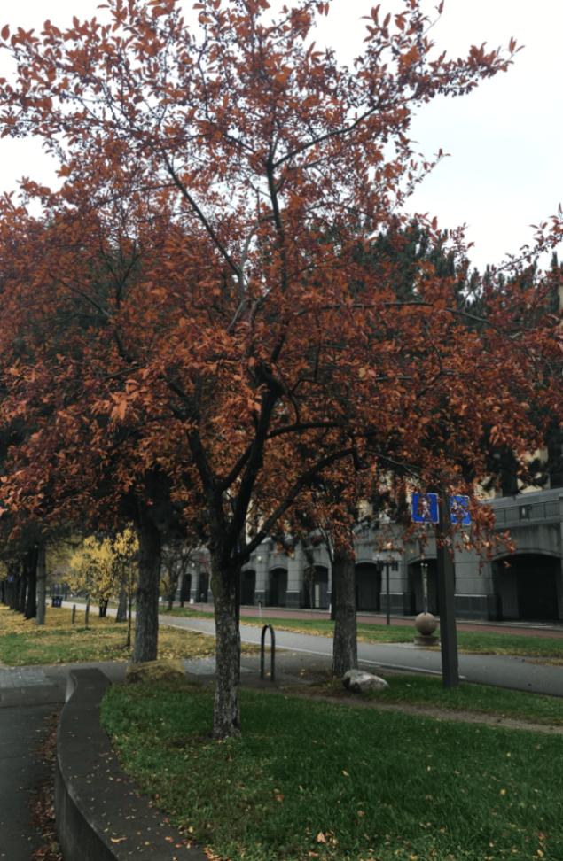 Fall Leaves Israel