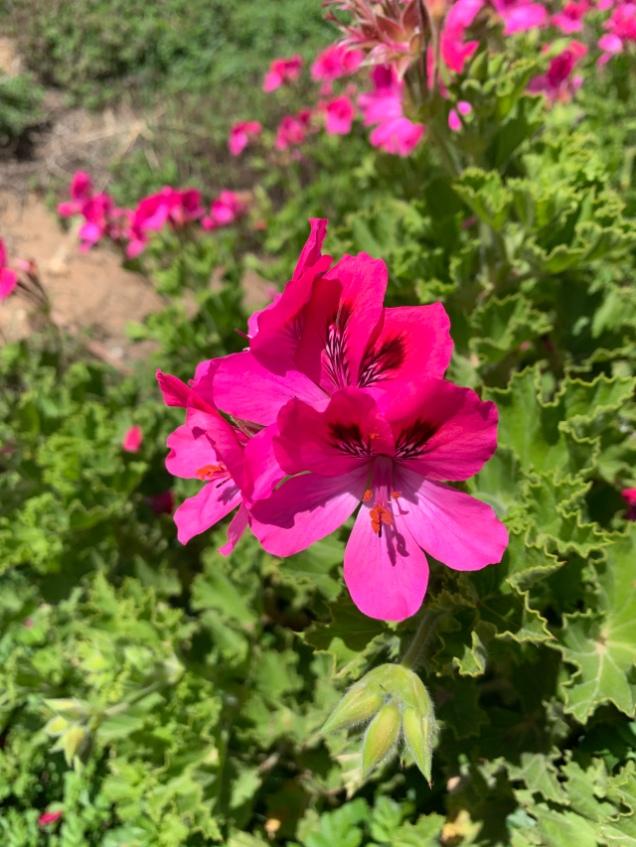 Beautiful flowers in Israel